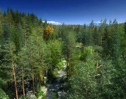 Forest Sence 2 3D model