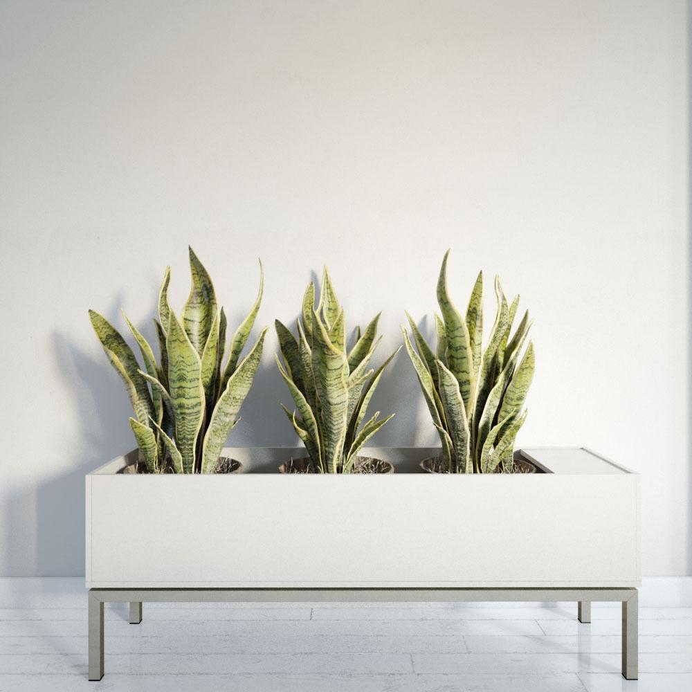 plant 26 am141