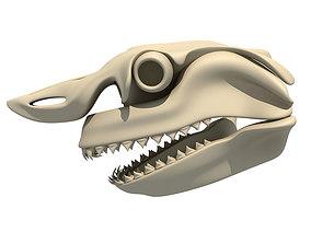 3D model Great White Shark Skull 22