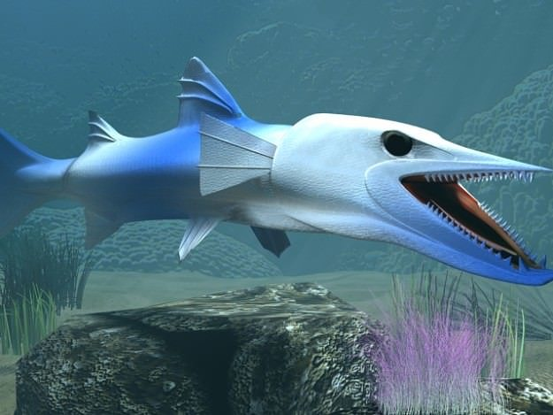 killer barracuda 3d model rigged animated max obj 3ds fbx lwo lw lws mtl 1