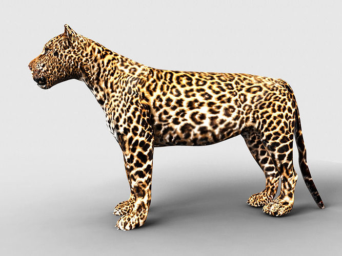 Leopard 3d Model 3d Model Animated Max Fbx Ma Mb