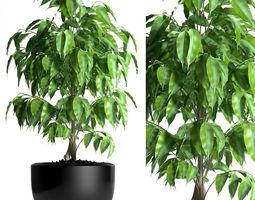 plant 128 3D model