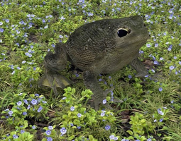animals Warty Toad 3D model