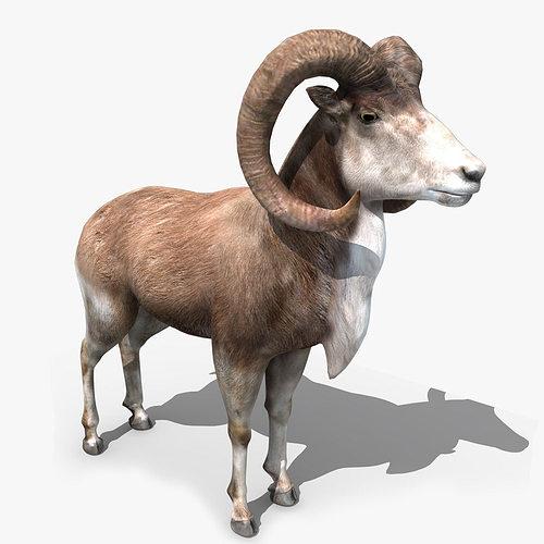 goat rigged 01 3d model rigged max obj mtl fbx ma mb 1