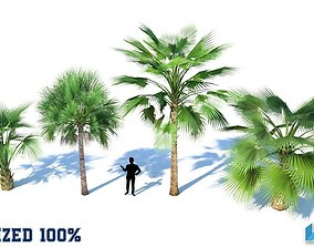 Palm Trees Optimized 3D asset