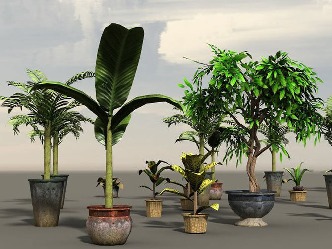 house plants 3d model low-poly obj fbx c4d lwo lw lws dae X 1