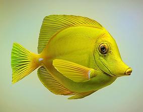 Yellow tang 3D asset