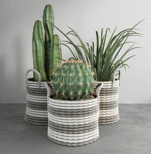 Cactus Set 3D