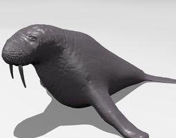 Walrus 3D print model mammal