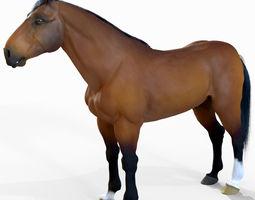 Horse 3D model animals