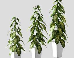 Plant in the pot - Dieffenbachia - 3 models 3D asset