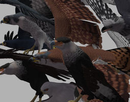 All kinds of Eagle 3D