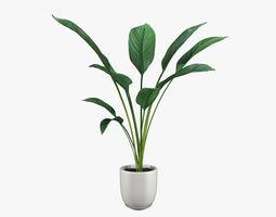 Pot Plant 20 3D model