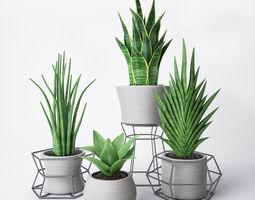 3D houseplant Sansevieria