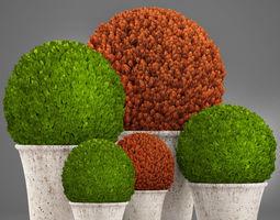 Topiary bush Buxus 3D