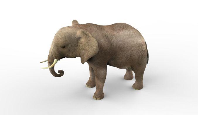 elephant middle-poly 3d model max obj mtl fbx blend 1
