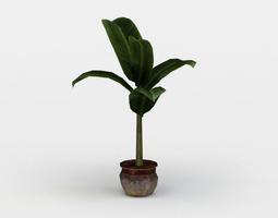 3d asset VR / AR ready banana plant