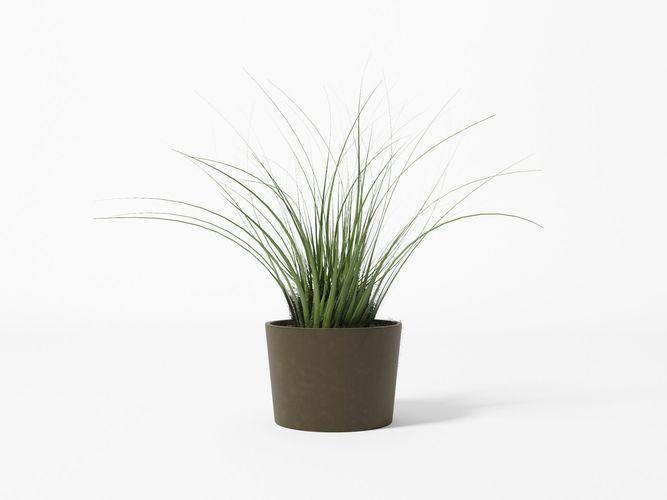 bush - pot - plant 3d model obj 3ds fbx c4d 1