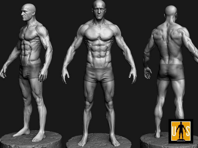 Beautiful Male Anatomy 3d Model Adornment - Anatomy And Physiology ...
