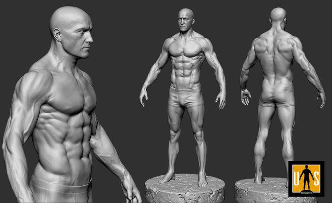 male anatomy study 3D printable model | CGTrader