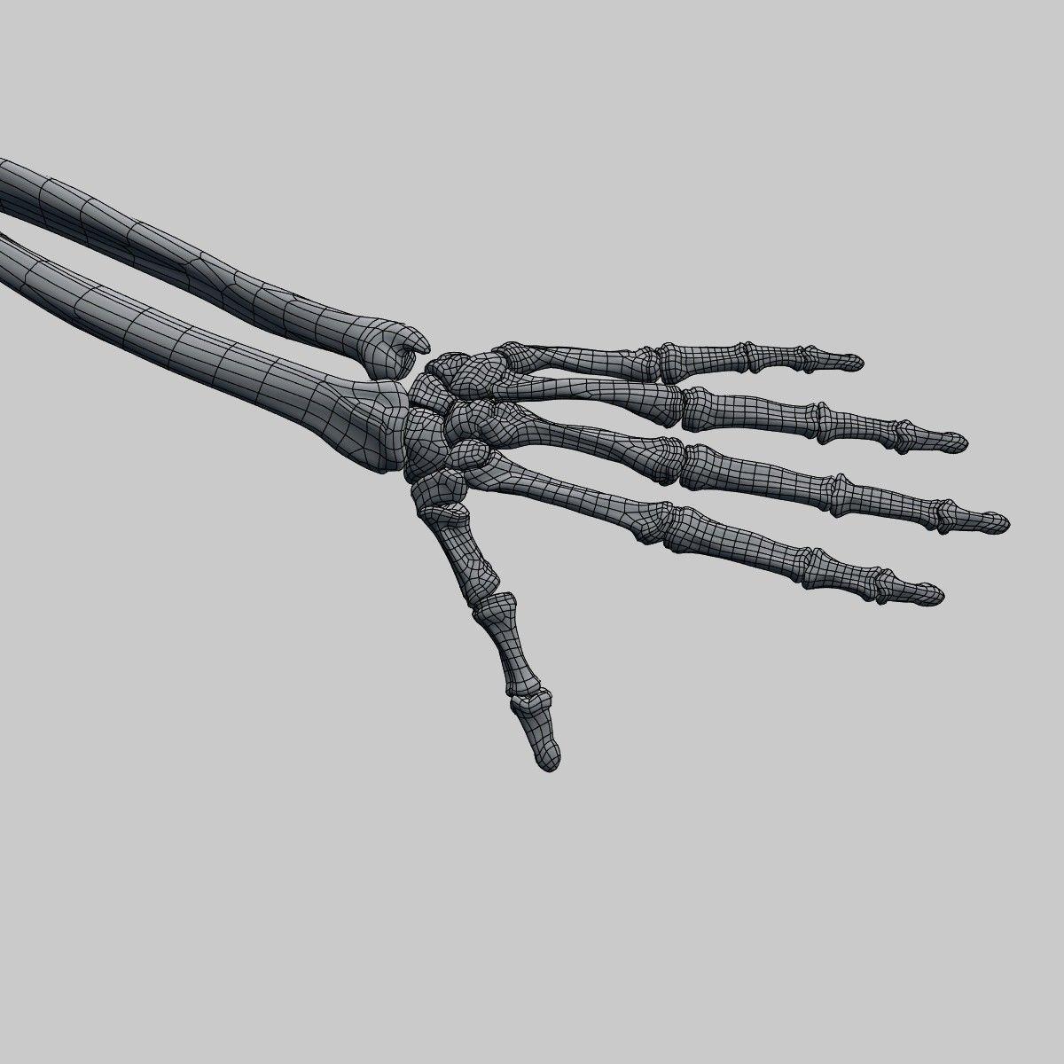 Plastic skeleton 3D   CGTrader
