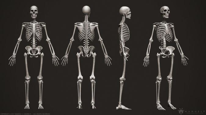 3d Human Skeleton Character Cgtrader