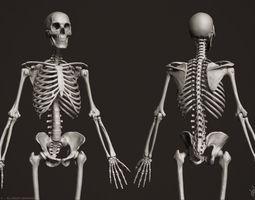 3D Human Skeleton character