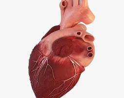 Human Heart cardiovascular 3D model