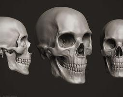 teeth 3d Human Skull