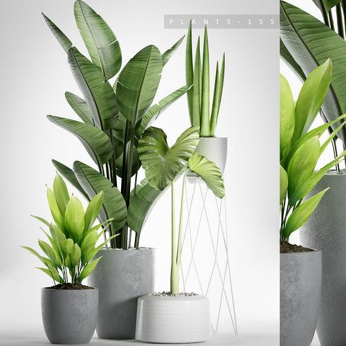 plants 155 3d model max fbx 1