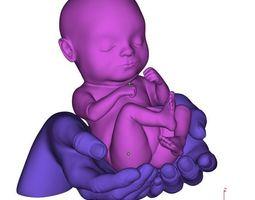 3D print model Baby in hands or embryo in hands