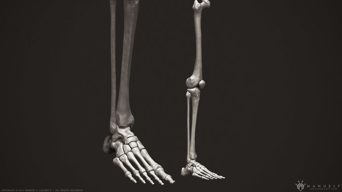 3D Human Leg Bones | CGTrader