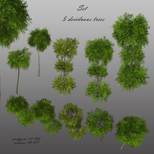 Decorative deciduous tree almonds  3D model