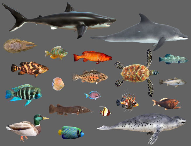 low poly fish collection animated - game ready pack 2 3d model low-poly obj mtl fbx 1