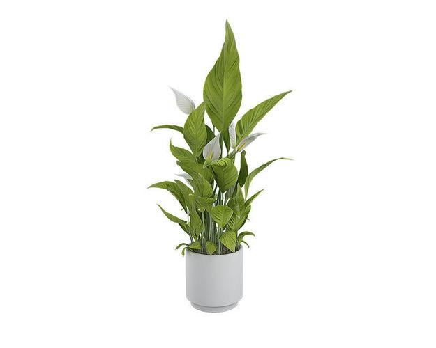 plant 07 3d model max obj mtl 3ds fbx mat 1