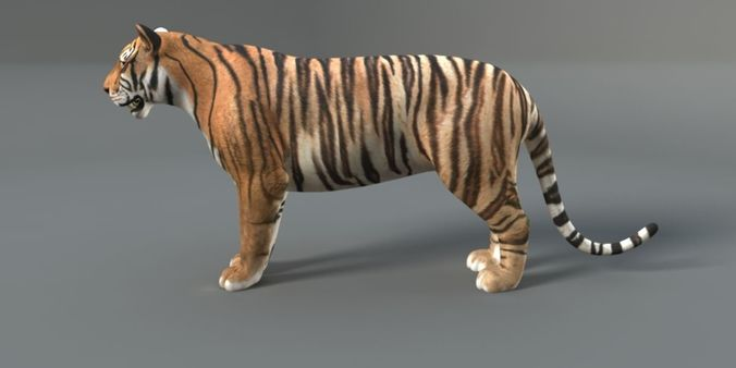 Tiger Rigged