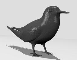 Common Tern -Printable common