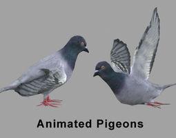 Pigeons 3D model