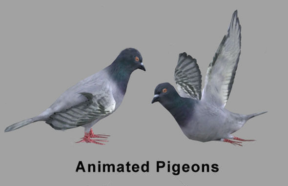 pigeons 3d model low-poly animated fbx 1