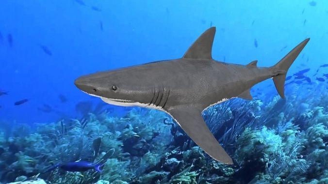 great white shark 3d model low-poly obj mtl 3ds fbx stl blend dae 1