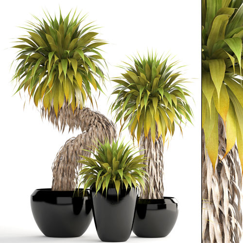 collection of tropical plants yucca 3d cgtrader. Black Bedroom Furniture Sets. Home Design Ideas