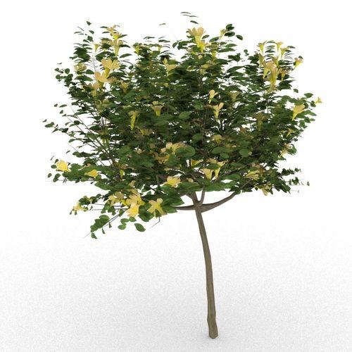 Allamanda cathartica 3d tree