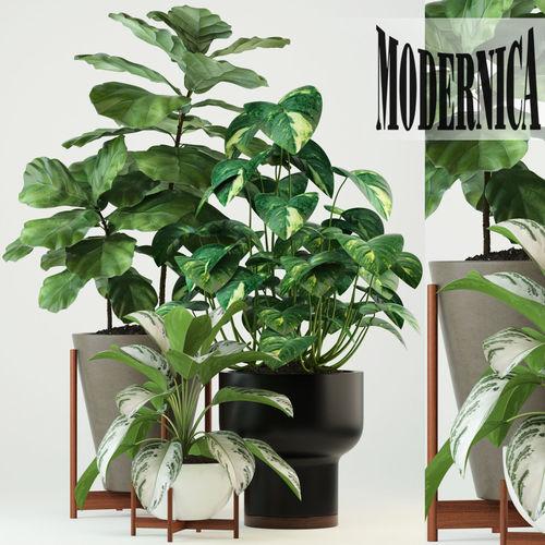 Plants collection 74 Modernica pots