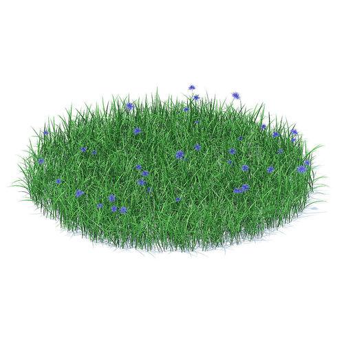 Grass with Cornflowers 3D Model