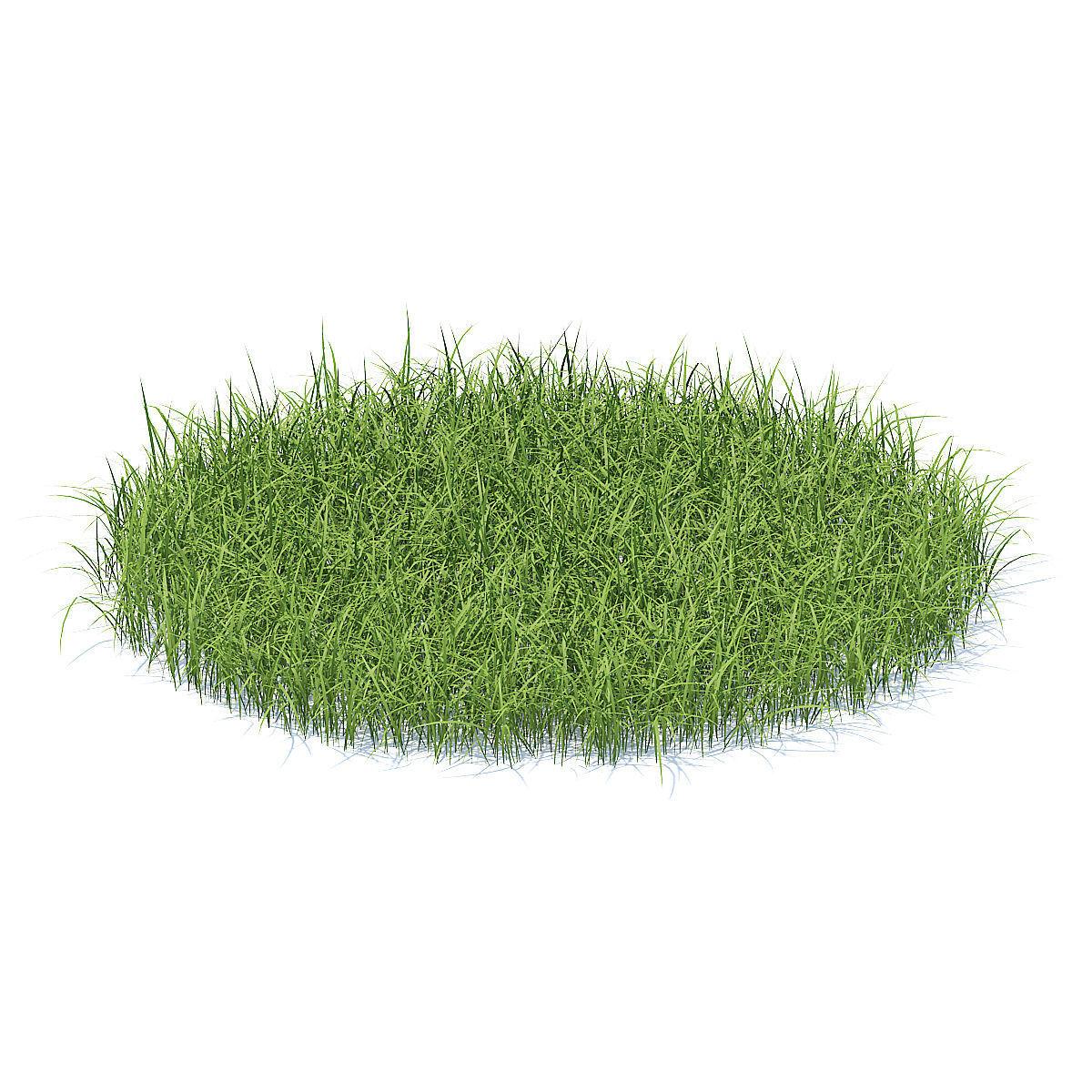 Tall Grass 3D Model
