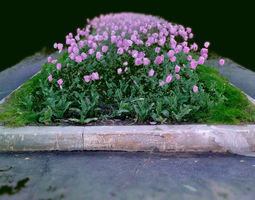 3D model Pink flowers tulpits