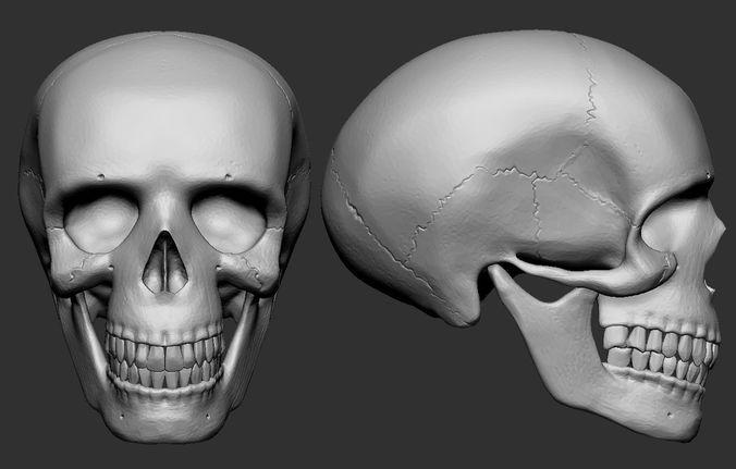 human skull 3d model obj stl 1