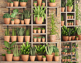 3D model collection of plants in clay pots