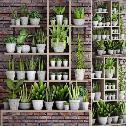 collection of plants in concrete pots 3d model max obj mtl fbx unitypackage prefab 1