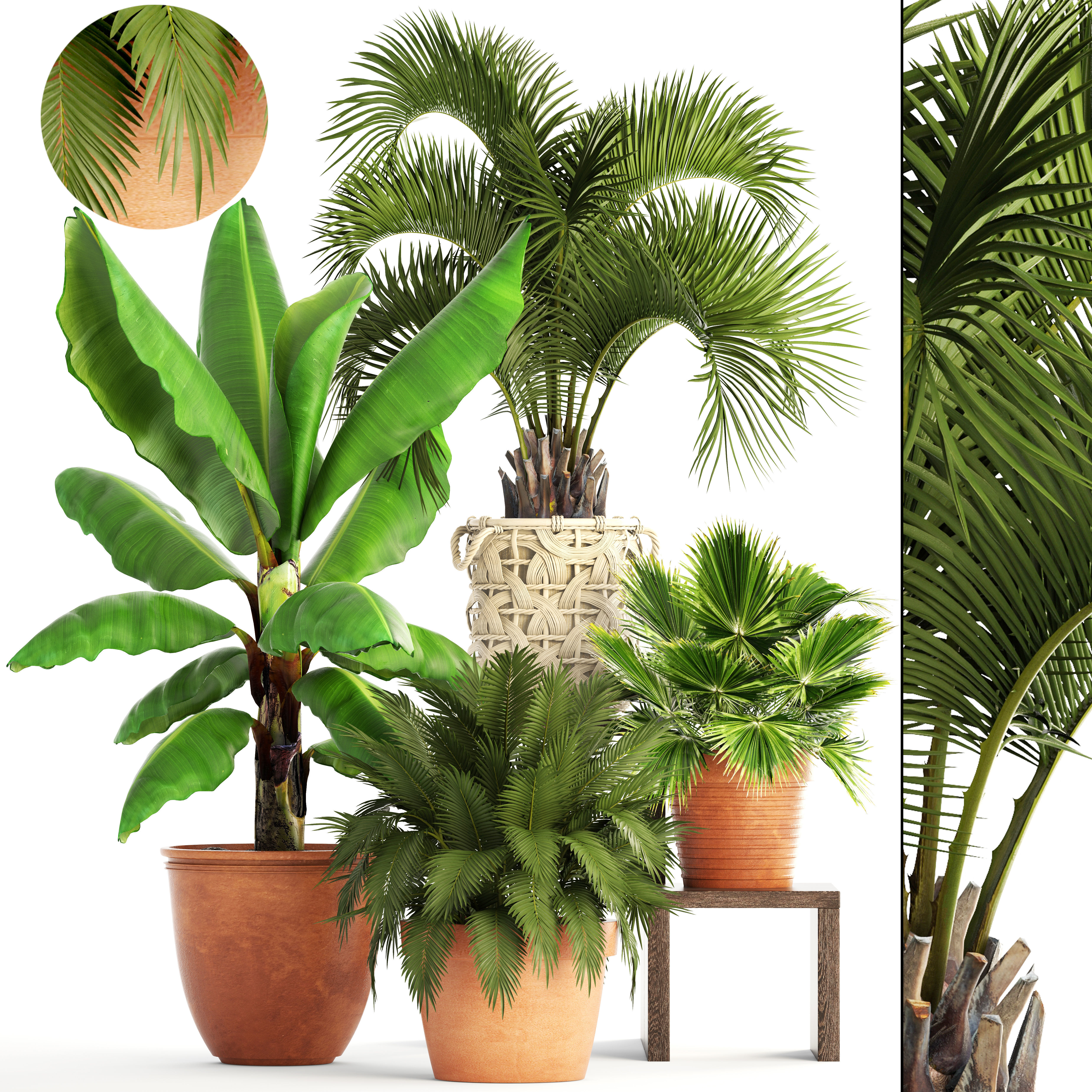 Collection of plants 3D model | CGTrader